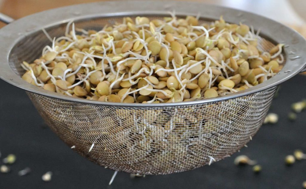 How to sprout (grains, beans, and legumes)?